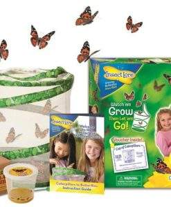 Live Butterfly Garden by Insect Lore sold by Gifts for Little Hands