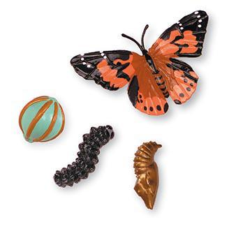 Butterfly Life Cycle Stages by Gifts for Little Hands